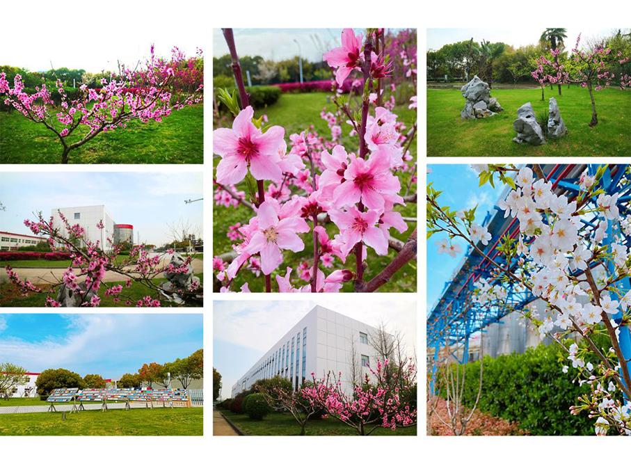 春天,花会开!